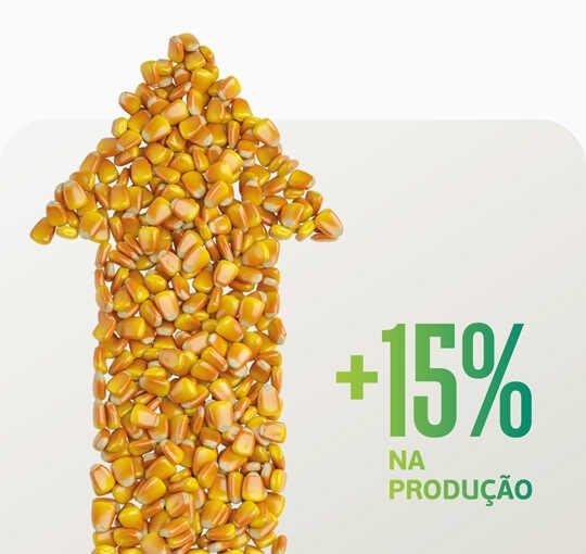 Vitakelp no milho safrinha é aumento da produção na certa! Veja como.